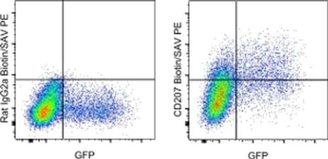 CD207 (Langerin) Rat anti-Mouse, Biotin, Clone: eBioL31, eBioscience™ 100 μg; Biotin CD207 (Langerin) Rat anti-Mouse, Biotin, Clone: eBioL31, eBioscience™