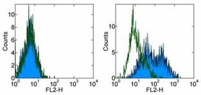 CD276 (B7-H3) Rat anti-Mouse, Biotin, Clone: M3.2D7, eBioscience  100 µg;