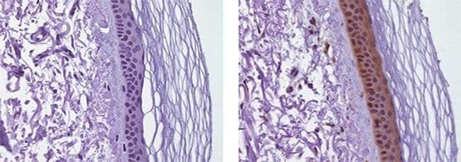 IL-38, Biotin, clone: H127C, eBioscience™ 100μg; Biotin IL-38, Biotin, clone: H127C, eBioscience™