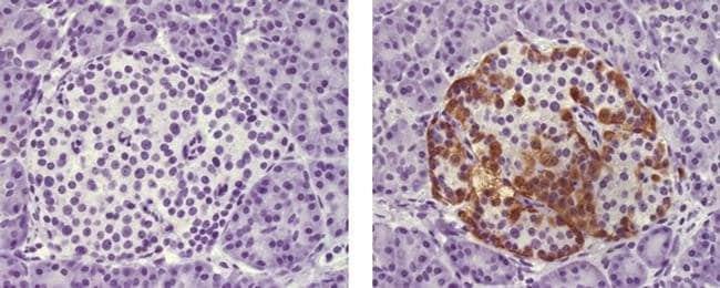 Glucagon Mouse anti-Human, Mouse, Rat, Biotin, Clone: ICACLS, eBioscience™ 25 μg; Biotin Primary Antibodies Gl to Go