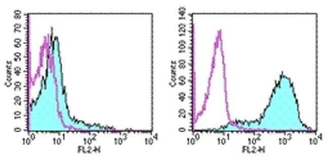 CD278 (ICOS) Rat anti-Mouse, Biotin, Clone: 7E.17G9, eBioscience ::