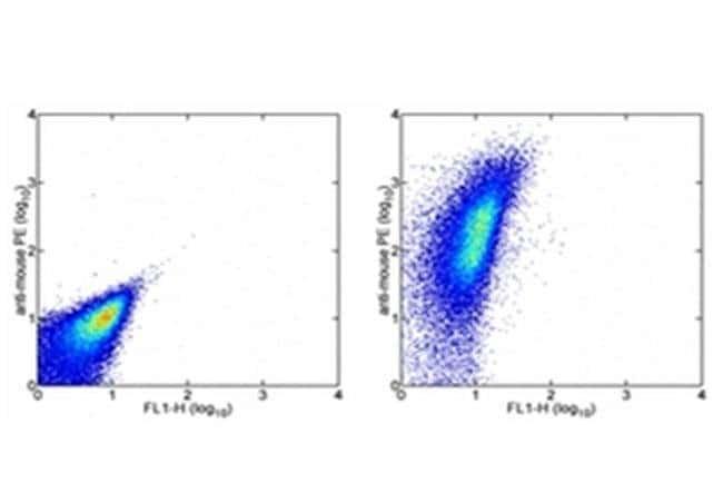 CD47 Mouse anti-Human, Clone: B6H12, eBioscience™ 25 μg; Unconjugated CD47 Mouse anti-Human, Clone: B6H12, eBioscience™