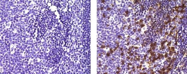 CD279 (PD-1), clone: J121, eBioscience™ 25μg; Unconjugated Primary Antibodies CD251 to CD400