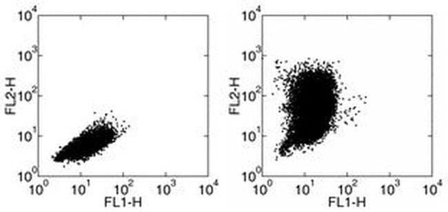 CCL2 (MCP-1) Armenian Hamster anti-Human, Mouse, Rat, Clone: 2H5, eBioscience