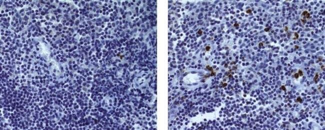 Granzyme B Rat anti-Human, Clone: 496B, eBioscience™ 25 μg; Unconjugated Granzyme B Rat anti-Human, Clone: 496B, eBioscience™