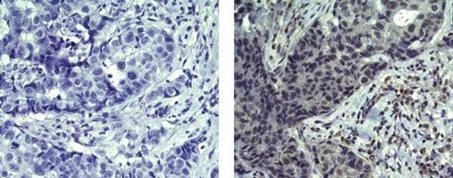 ErbB4 (Her4) Mouse anti-Human, Mouse, Clone: HFR1, eBioscience Invitrogen