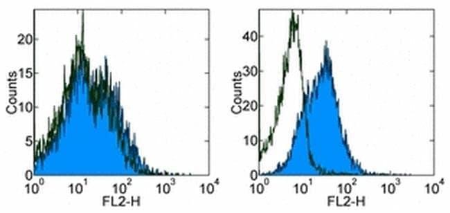 CD279 (PD-1) Rat anti-Mouse, Clone: RMP1-30, eBioscience  500 µg;