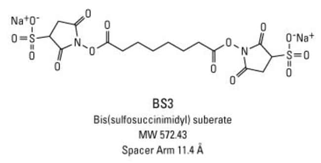 Thermo Scientific BS3 (bis(sulfosuccinimidyl)suberate):Life Sciences:Protein