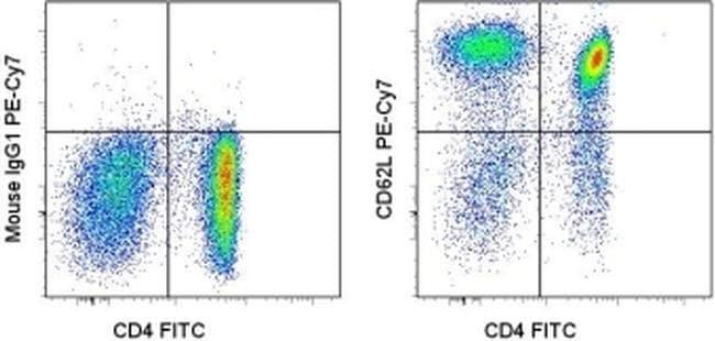 CD62L (L-Selectin) Mouse anti-Human, PE-Cyanine7, Clone: DREG-56 (DREG56), eBioscience™ 25 Tests; PE-Cyanine7 CD62L (L-Selectin) Mouse anti-Human, PE-Cyanine7, Clone: DREG-56 (DREG56), eBioscience™