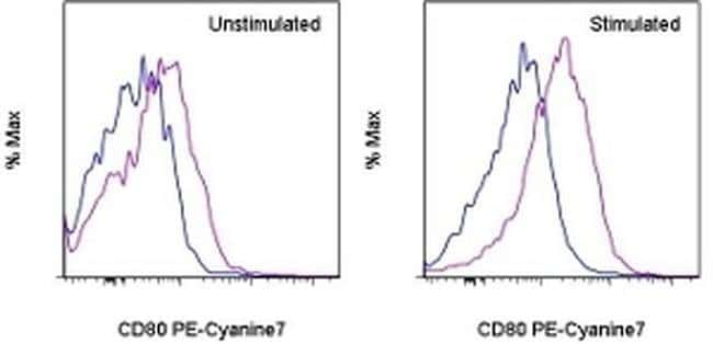 CD80 (B7-1) Armenian Hamster anti-Canine, Mouse, Porcine, PE-Cyanine7,