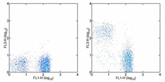 CD90.2 (Thy-1.2) Rat anti-Mouse, PE-Cyanine7, Clone: 53-2.1, eBioscience™ 50 μg; PE-Cyanine7 CD90.2 (Thy-1.2) Rat anti-Mouse, PE-Cyanine7, Clone: 53-2.1, eBioscience™