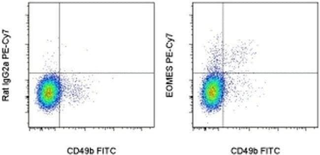 EOMES Rat anti-Mouse, PE-Cyanine7, Clone: Dan11mag, eBioscience™ 25 μg; PE-Cyanine7 EOMES Rat anti-Mouse, PE-Cyanine7, Clone: Dan11mag, eBioscience™