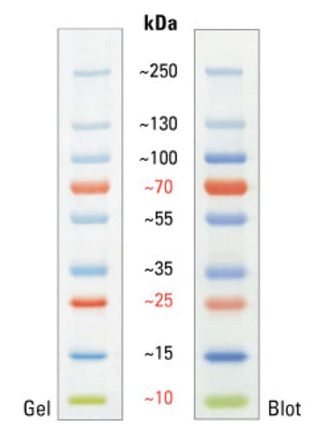 Thermo Scientific™ PageRuler™ Plus Prestained 10-250kDa Protein Ladder: Electrophoresis Reagents Electrophoresis