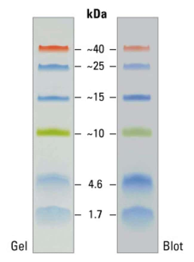 Thermo Scientific Spectra Multicolor Low Range Protein Ladder:Electrophoresis,