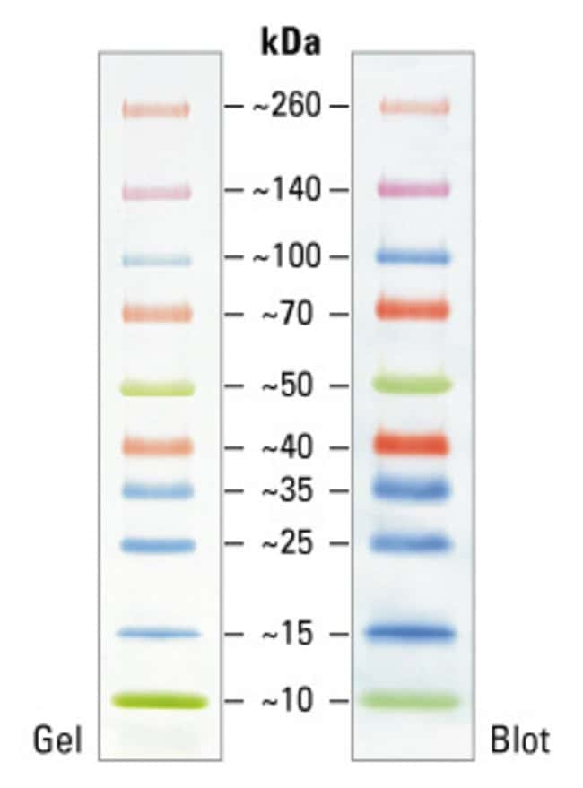 Thermo Scientific™ Spectra™ Multicolor Broad Range Protein Ladder: Electrophoresis Reagents Electrophoresis