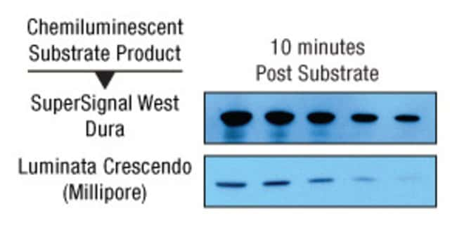 Thermo Scientific™SuperSignal™ West Dura Extended Duration Substrate