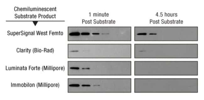 Thermo Scientific™ SuperSignal™ West Femto Maximum Sensitivity Substrate: Western Blotting Reagents, Membranes, Supplies Electrophoresis, Western Blotting and ELISA