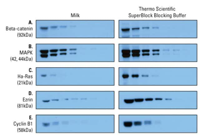 Thermo Scientific™ SuperBlock™ (TBS) Blocking Buffer: ELISA Reagents ELISA Reagents, Plates and Accessories