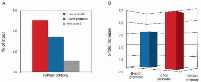 Acetyl-Histone H3 (Lys9) Rabbit anti-Human, Mouse, Polyclonal, Invitrogen