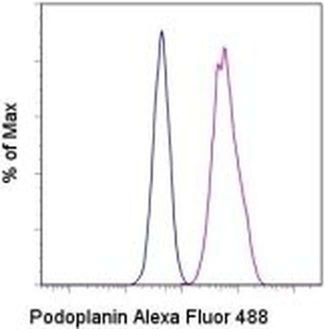 Podoplanin Syrian Hamster anti-Mouse, Alexa Fluor(T) 488, Clone: eBio8.1.1