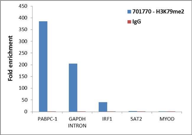 Di-Methyl-Histone H3 (Lys79) Rabbit anti-Human, Invitrogen 100 µg;