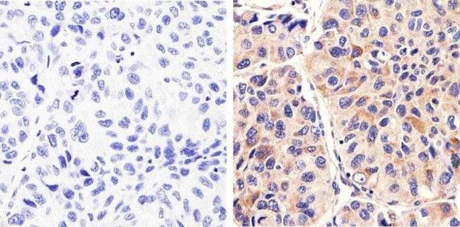 Syndecan 2 Rabbit anti-Human, Invitrogen 100 µg; Unconjugated