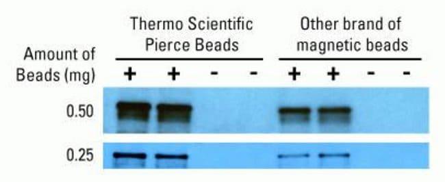 Thermo Scientific Pierce Streptavidin Magnetic Beads :Life Sciences:Protein