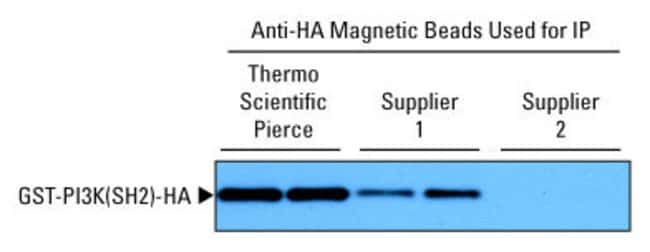 Thermo Scientific Pierce Anti-HA Magnetic Beads :Life Sciences:Protein