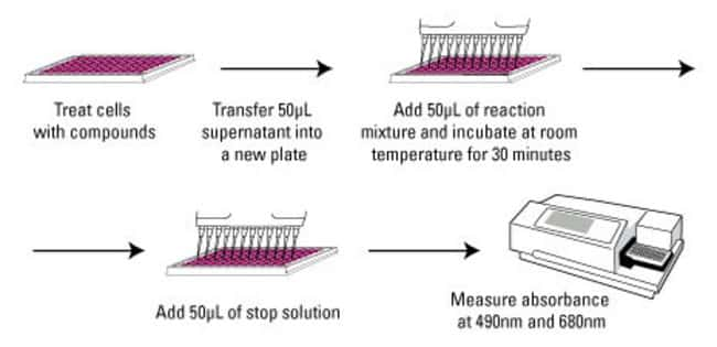 Thermo Scientific Pierce LDH Cytotoxicity Assay Kit LDH Cytotoxicity Assay