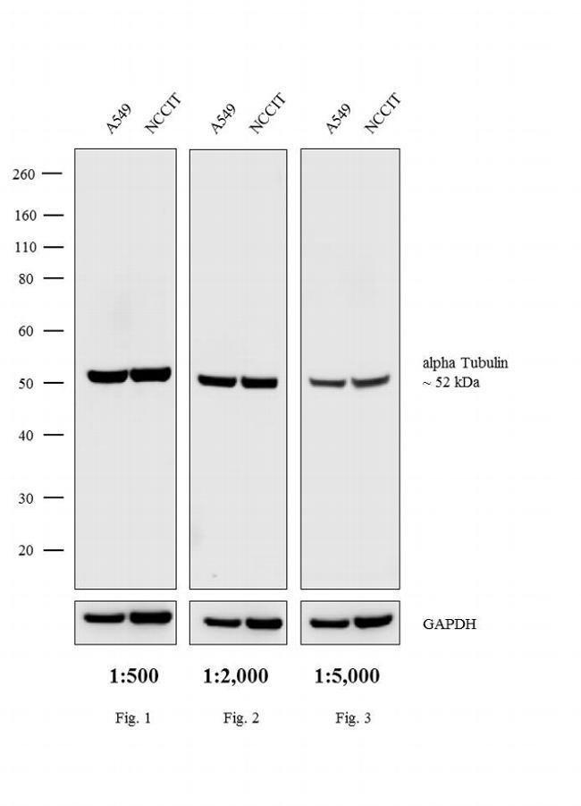 IgG (H+L) Cross-Adsorbed Goat anti-Rat, HRP, Invitrogen™ 500 μg; HRP Secondary Antibody Goat Anti-Rat