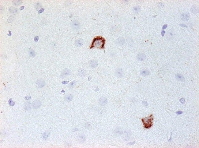 NPY Mouse anti-Human, Mouse, Rat, Clone: 8, Invitrogen 200 µL; Unconjugated