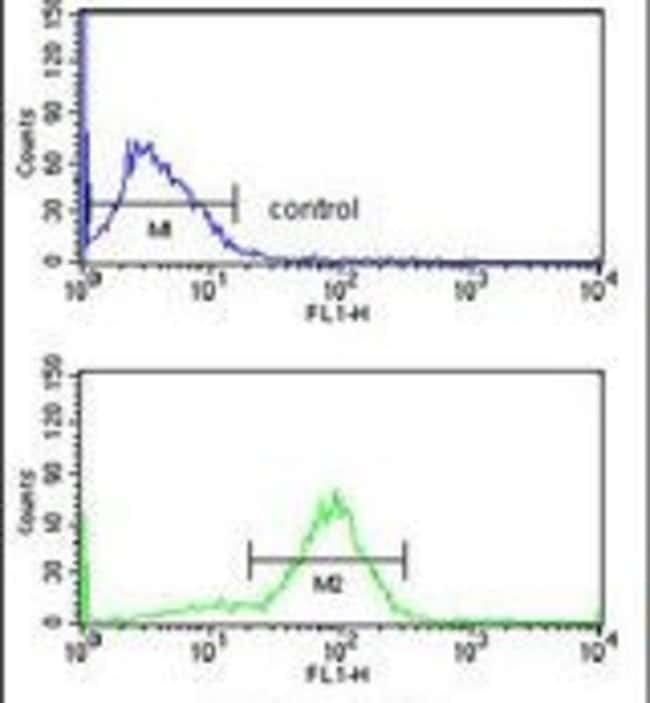 ANO7 Rabbit anti-Human, Polyclonal, Invitrogen 400 µL; Unconjugated