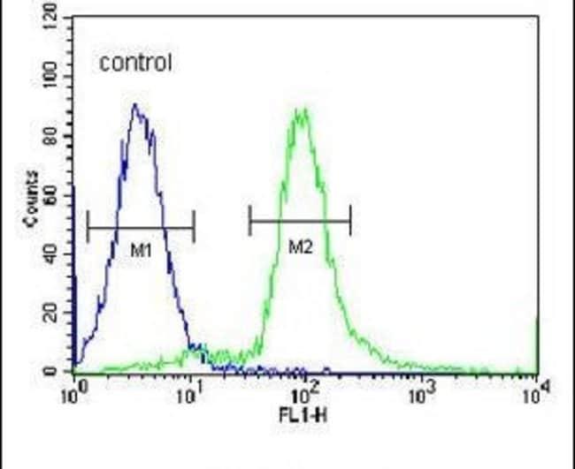 ARHGAP10 Rabbit anti-Human, Polyclonal, Invitrogen 400 µL; Unconjugated
