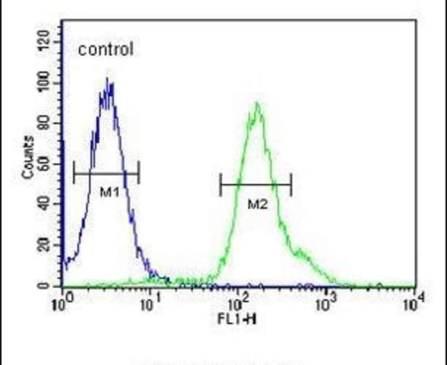 ARMC5 Rabbit anti-Human, Mouse, Polyclonal, Invitrogen 400 µL; Unconjugated