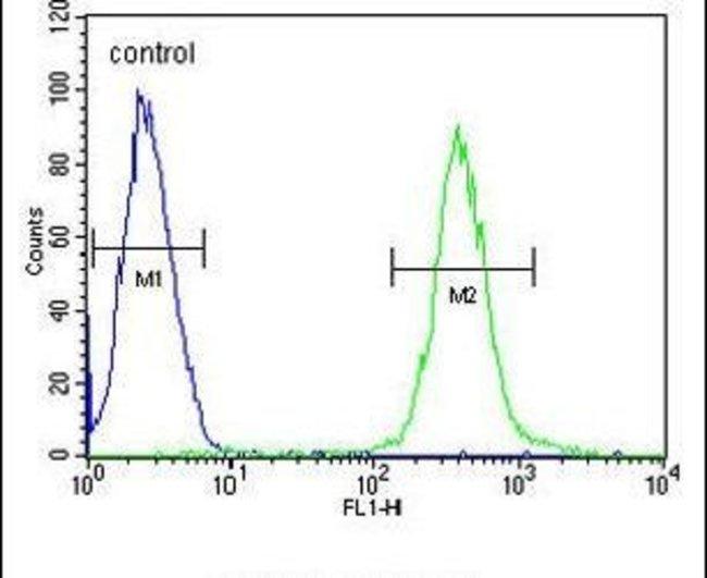 ATP8B2 Rabbit anti-Human, Polyclonal, Invitrogen 400 µL; Unconjugated