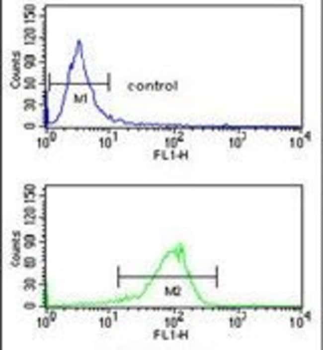 ATP1B2 Rabbit anti-Human, Polyclonal, Invitrogen 400 µL; Unconjugated