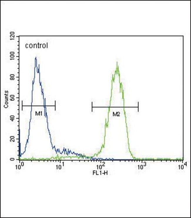 ATP7B Rabbit anti-Human, Mouse, Polyclonal, Invitrogen 400 µL; Unconjugated