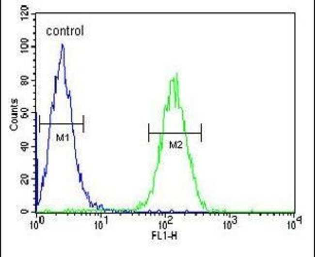 AXIN2 Rabbit anti-Human, Mouse, Polyclonal, Invitrogen 400 µL; Unconjugated