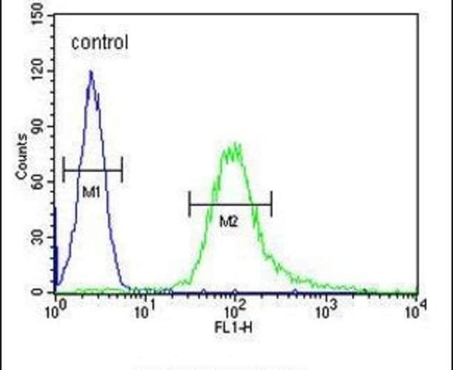 B3GNT4 Rabbit anti-Human, Mouse, Polyclonal, Invitrogen 400 µL; Unconjugated