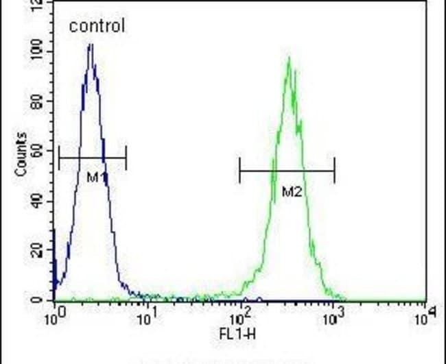 B4GALT5 Rabbit anti-Human, Mouse, Polyclonal, Invitrogen 400 µL; Unconjugated