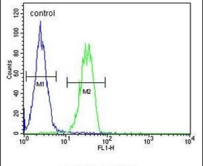 B4GALT6 Rabbit anti-Human, Polyclonal, Invitrogen 400 µL; Unconjugated