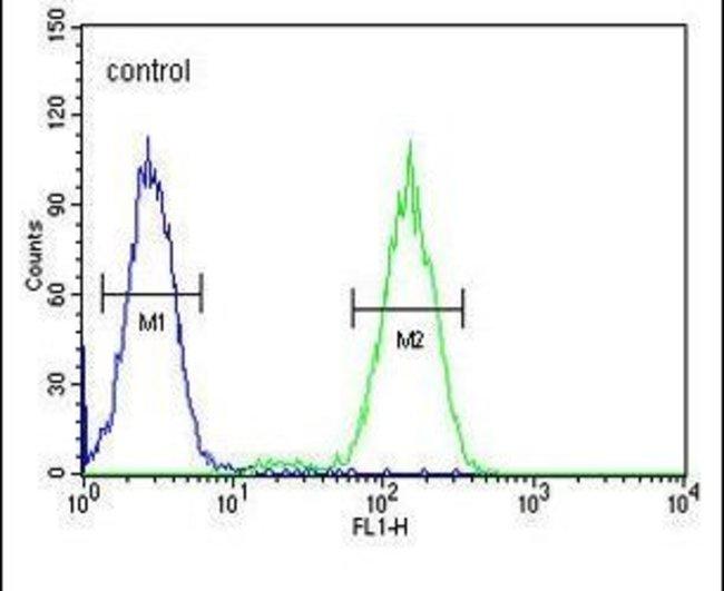 BCKDHB Rabbit anti-Human, Polyclonal, Invitrogen 400 µL; Unconjugated