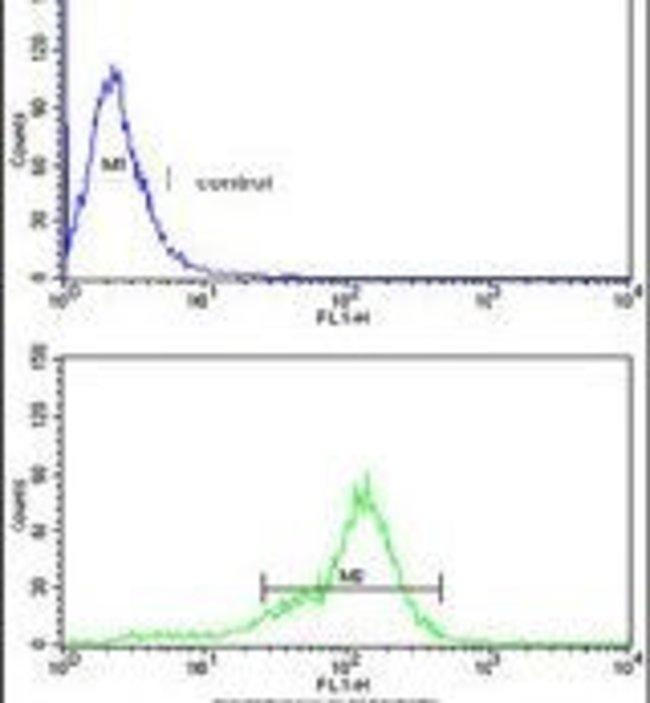 BCL2A1 Rabbit anti-Human, Polyclonal, Invitrogen 400 µL; Unconjugated