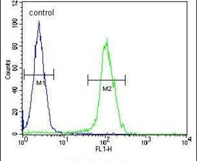 BEX1 Rabbit anti-Human, Polyclonal, Invitrogen 400 µL; Unconjugated