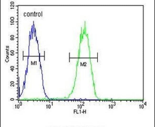 BIN2 Rabbit anti-Human, Polyclonal, Invitrogen 400 µL; Unconjugated