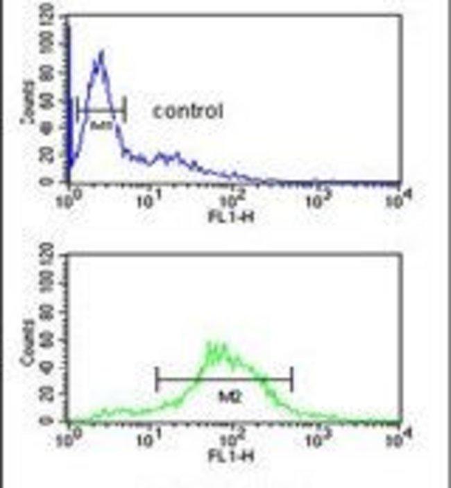BTBD9 Rabbit anti-Human, Mouse, Polyclonal, Invitrogen 400 µL; Unconjugated