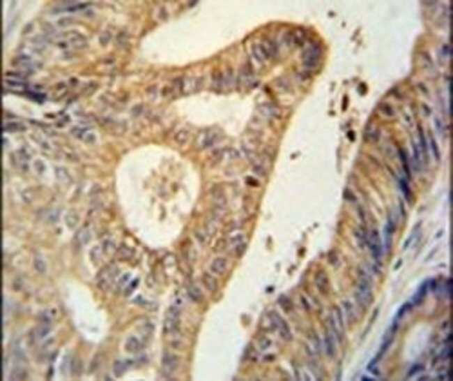 BTG1 Rabbit anti-Human, Mouse, Polyclonal, Invitrogen 400 µL; Unconjugated