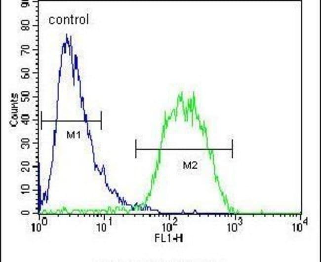 BUD13 Rabbit anti-Human, Mouse, Polyclonal, Invitrogen 400 µL; Unconjugated