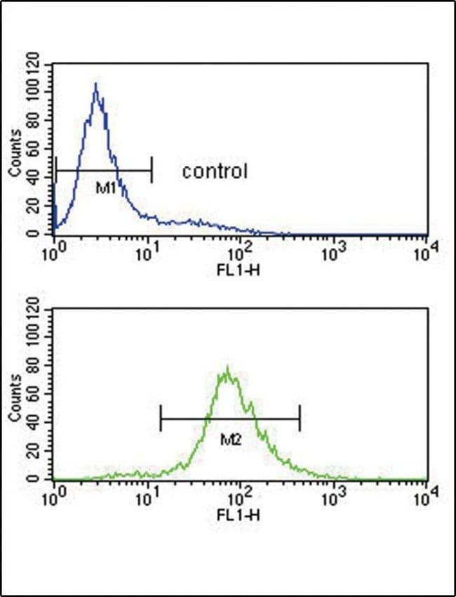BCL6 Rabbit anti-Human, Mouse, Polyclonal, Invitrogen 400 µL; Unconjugated