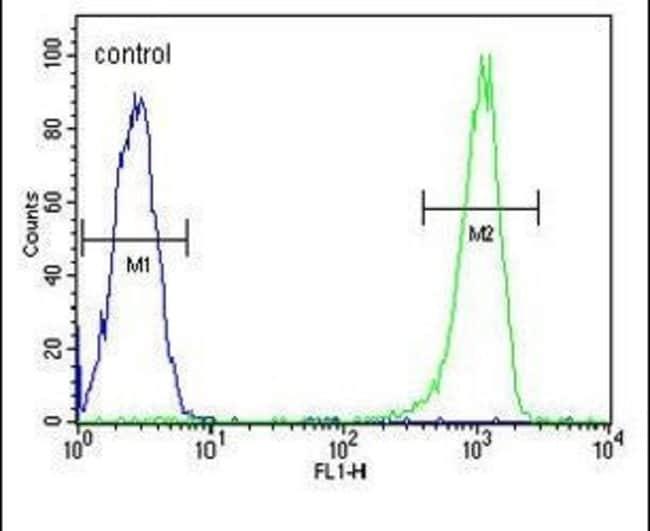 C11orf53 Rabbit anti-Human, Polyclonal, Invitrogen 400 µL; Unconjugated